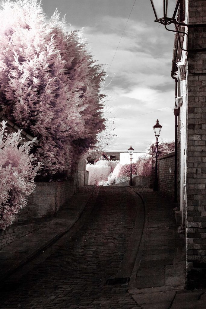 Pink Infrared